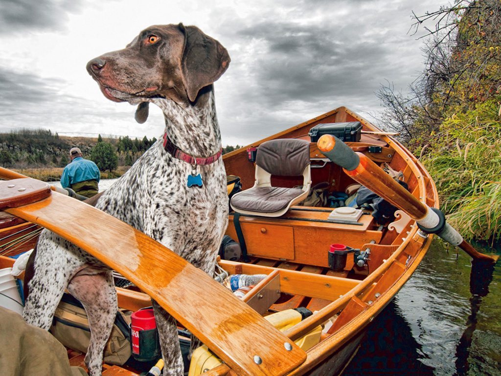 Beast Practices: How To Travel With Your Pets This Summer