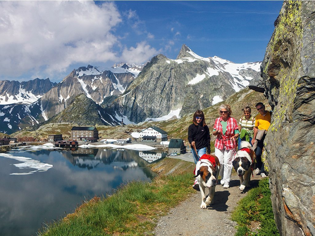 St Bernard Switzerland Dogs