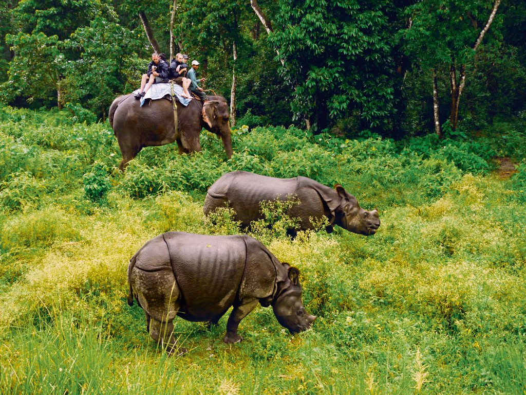 Rhinoceros Chitwan National Park Elephant