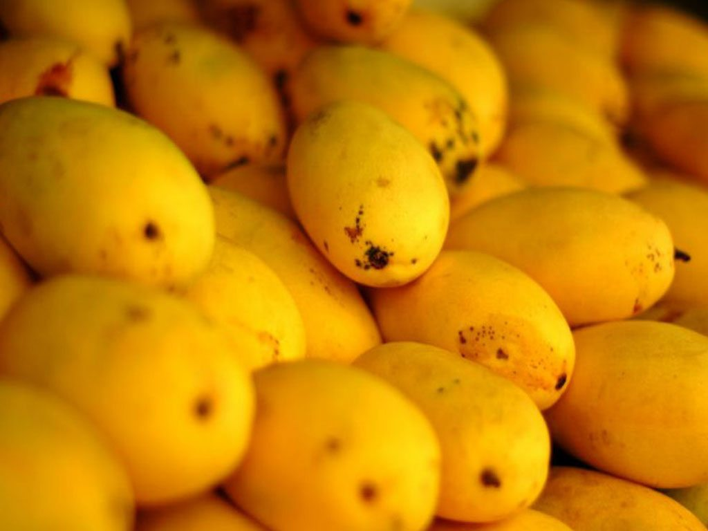 Eat Your Way Through India With These 14 Mangoes 2