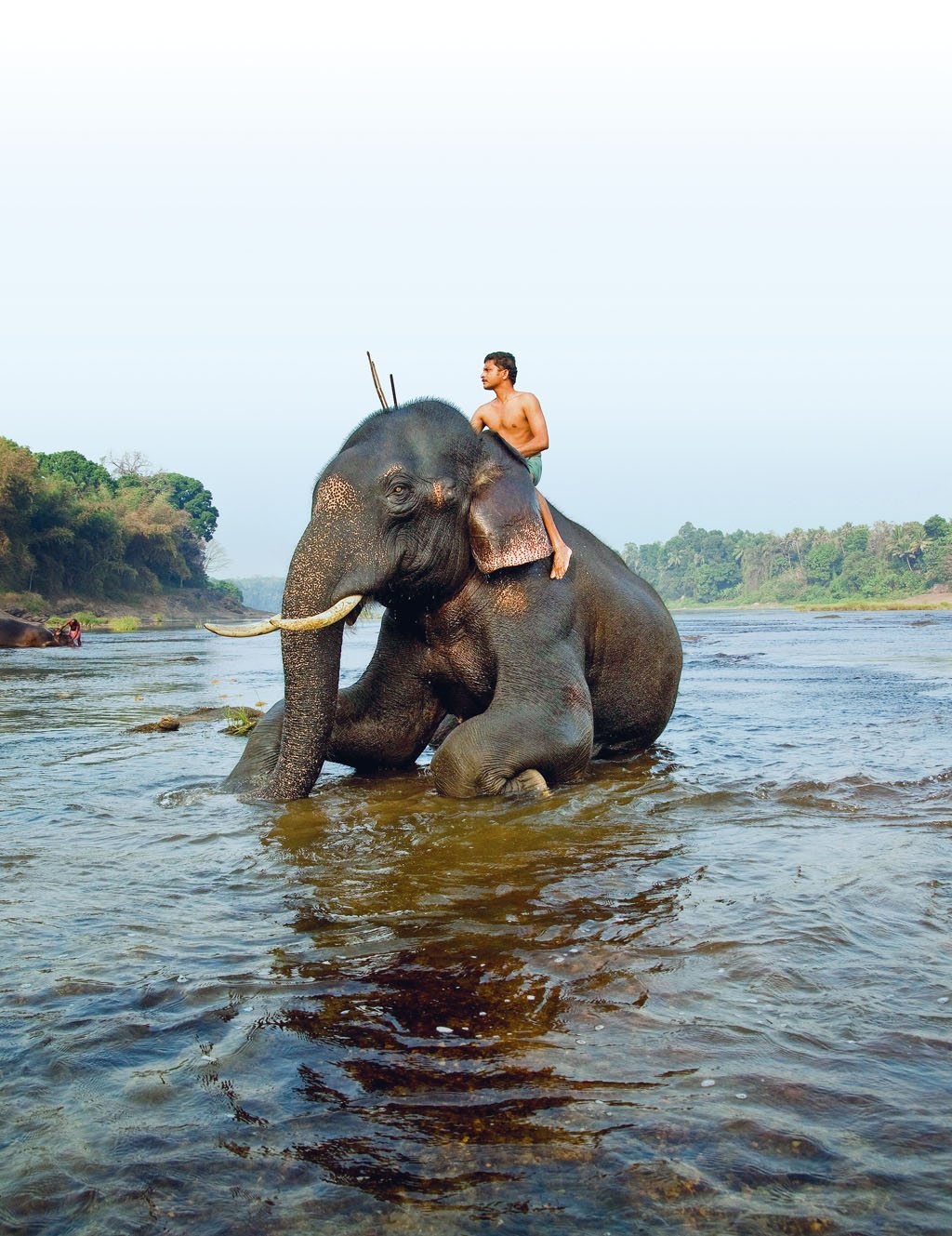 Bathing the Elephant, Periyar