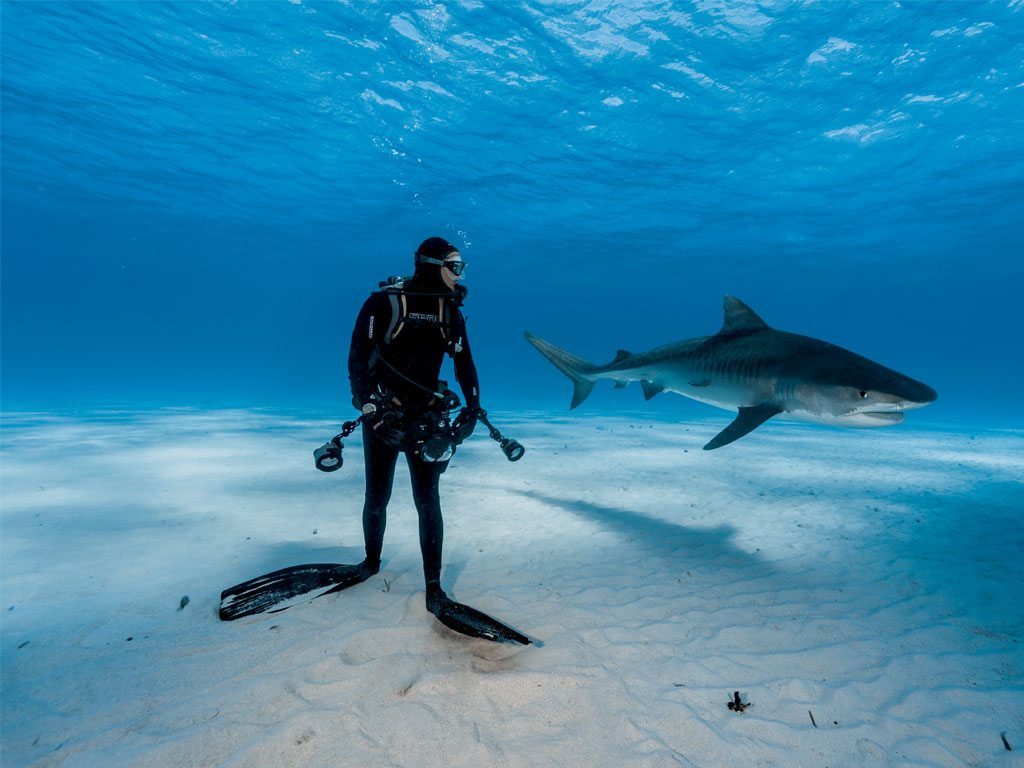 Diver Tiger Shark Bahamas