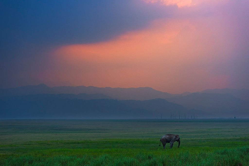 Elephant Corbett National Park Sunset
