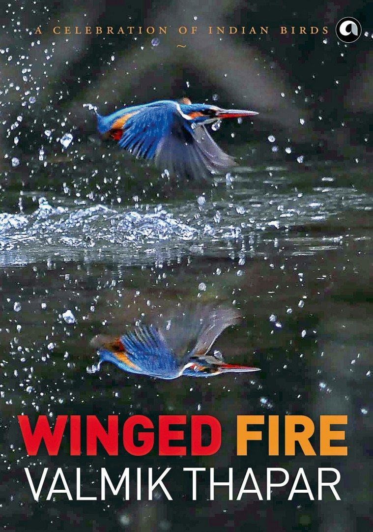 Winged Fire: A Celebration of Indian Birds (Aleph Book Company, 2016, ₹ 2,995)