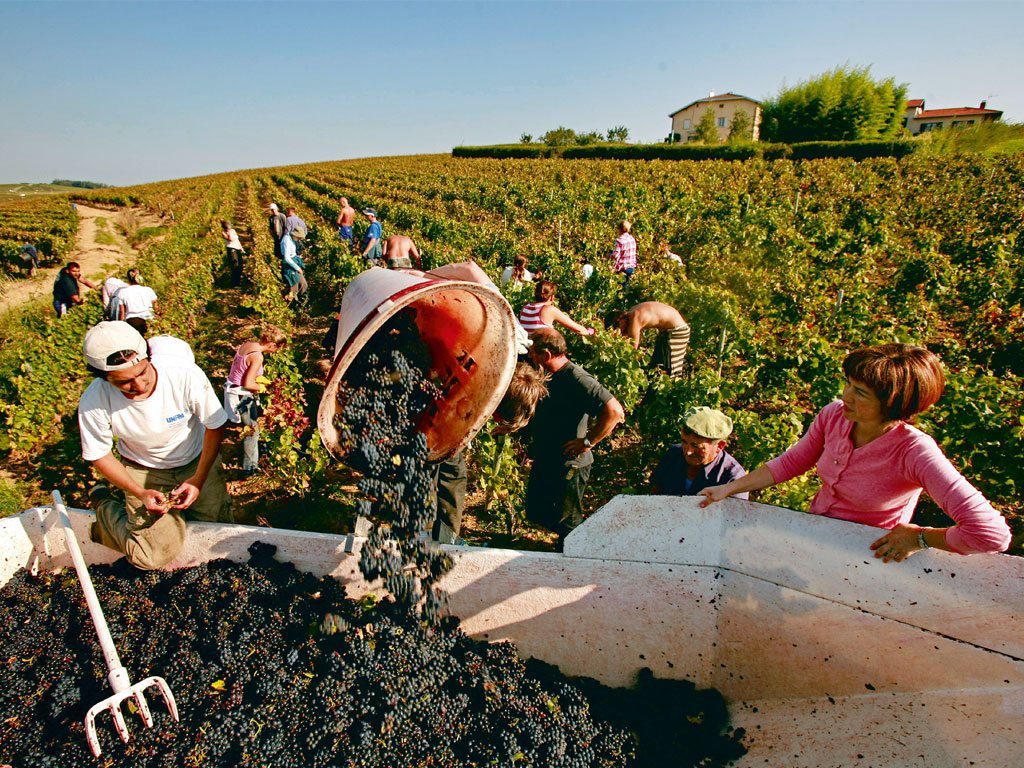 Under the Influence in Wine-Soaked Beaujolais