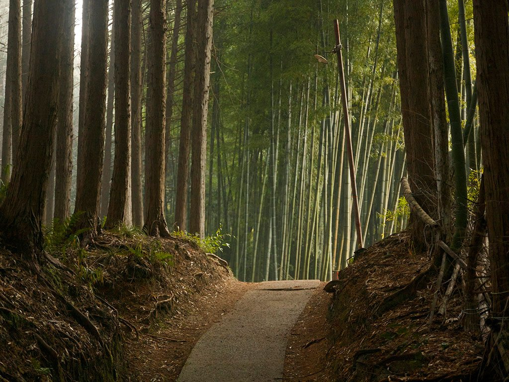 Forest Bathing The Japanese Secret To Good Health Nat