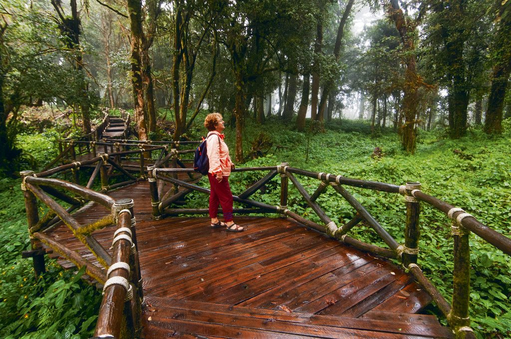 Doi InthanDoi Inthanon National Park, Thailandon National Park