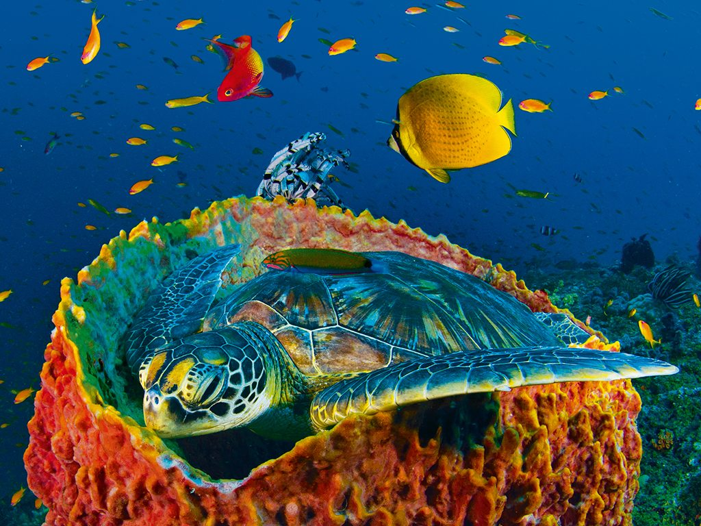 Turtle Andamans