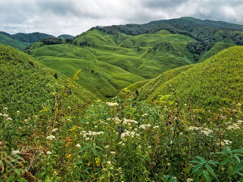 Valley of Flowers Nagaland