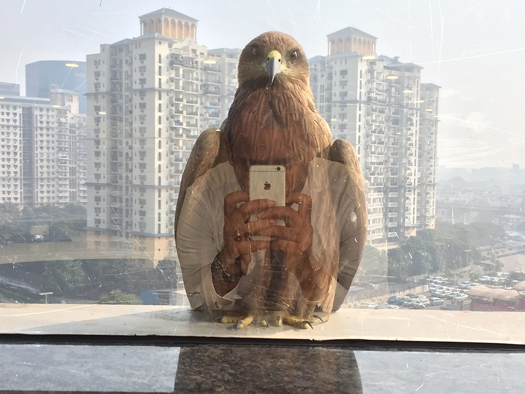 Realities blended when this winged visitor stopped by one of Gurgaon's busy office complexes.