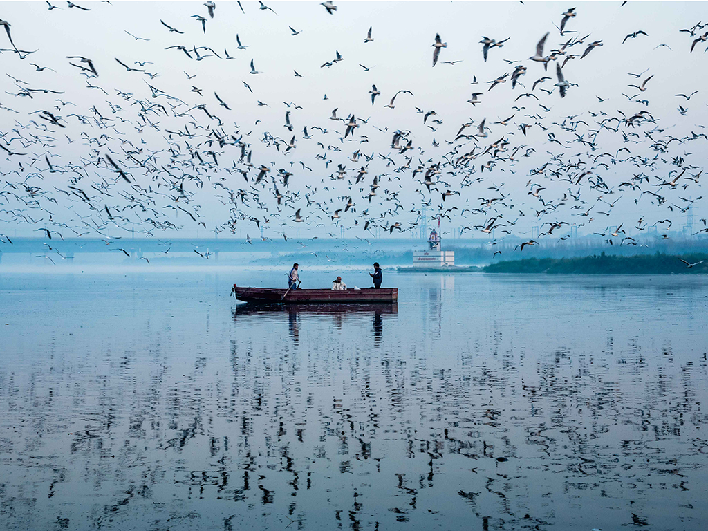 The day begins early on the Yamuna, with birds and boatsmen taking to the water at first light.