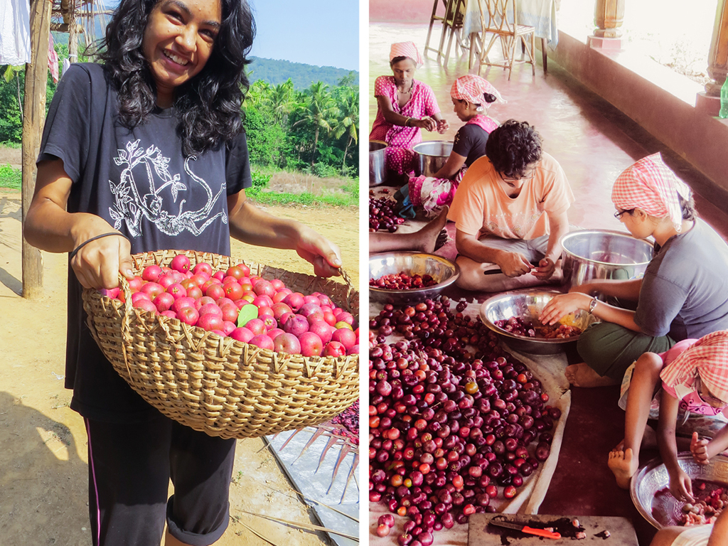 Harvesting Kokum and Life Lessons with Karnataka's Ancient Tribes