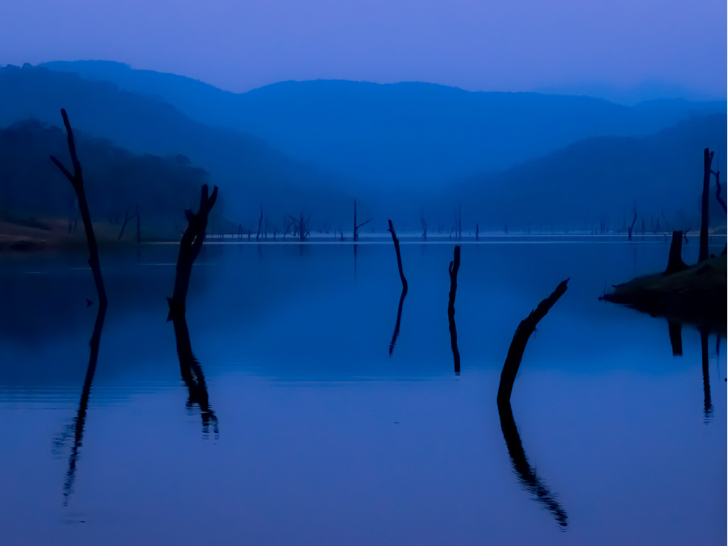 Take a boat ride on the lake in Kerala's Periyar Tiger Reserve to spot deer, birdlife, and sunken tree stumps.