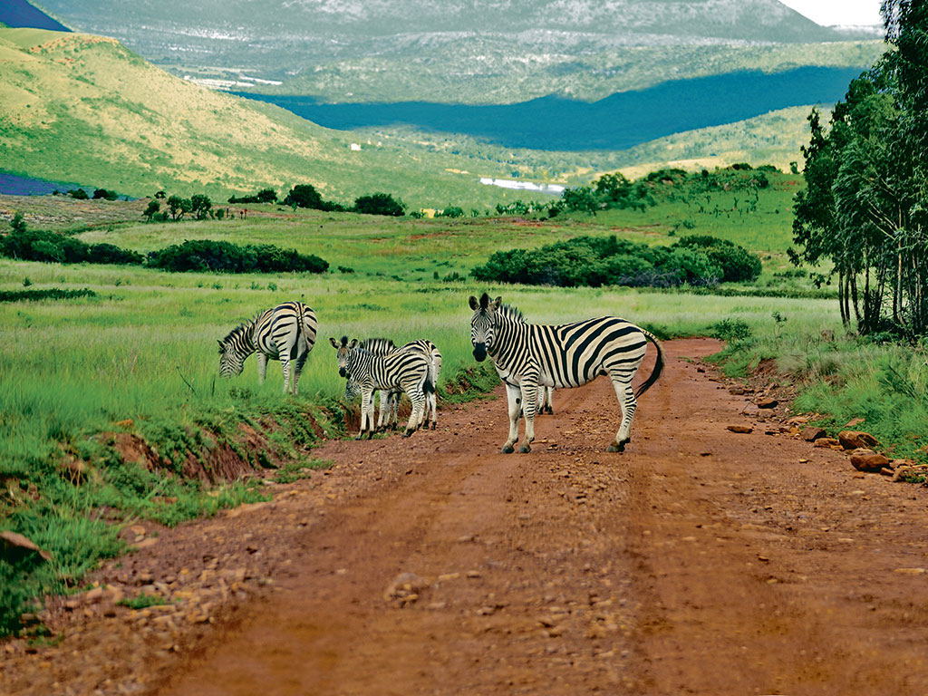 Crystal Springs nature reserve, South Africa, wildlife