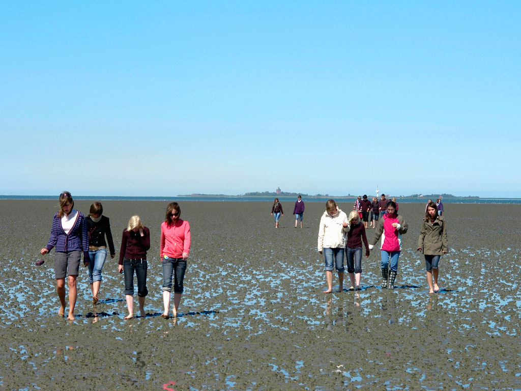 mudflat Germany