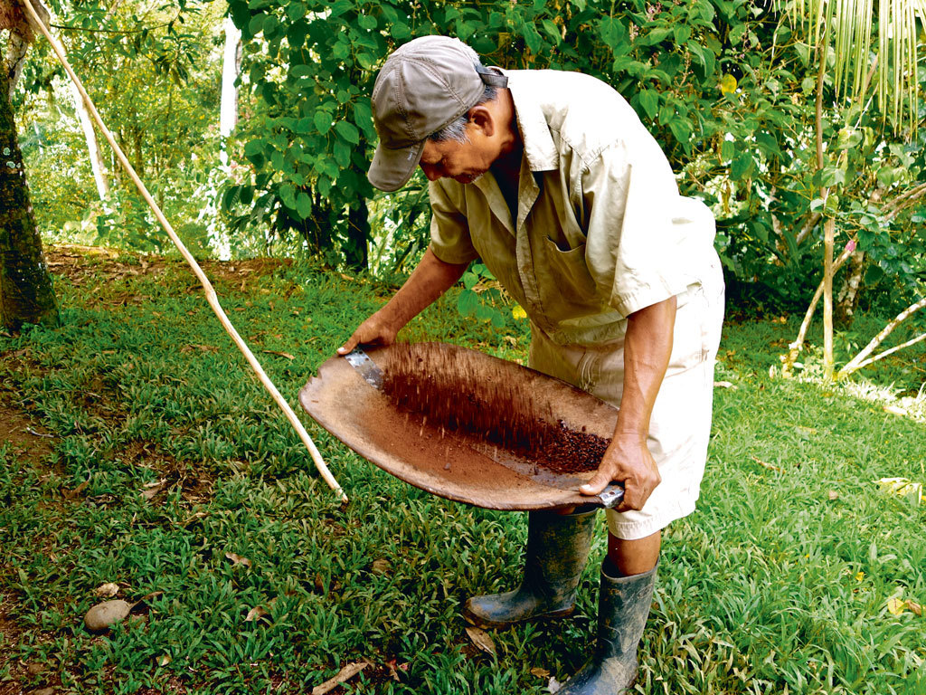 Costa Rica's cacao growers