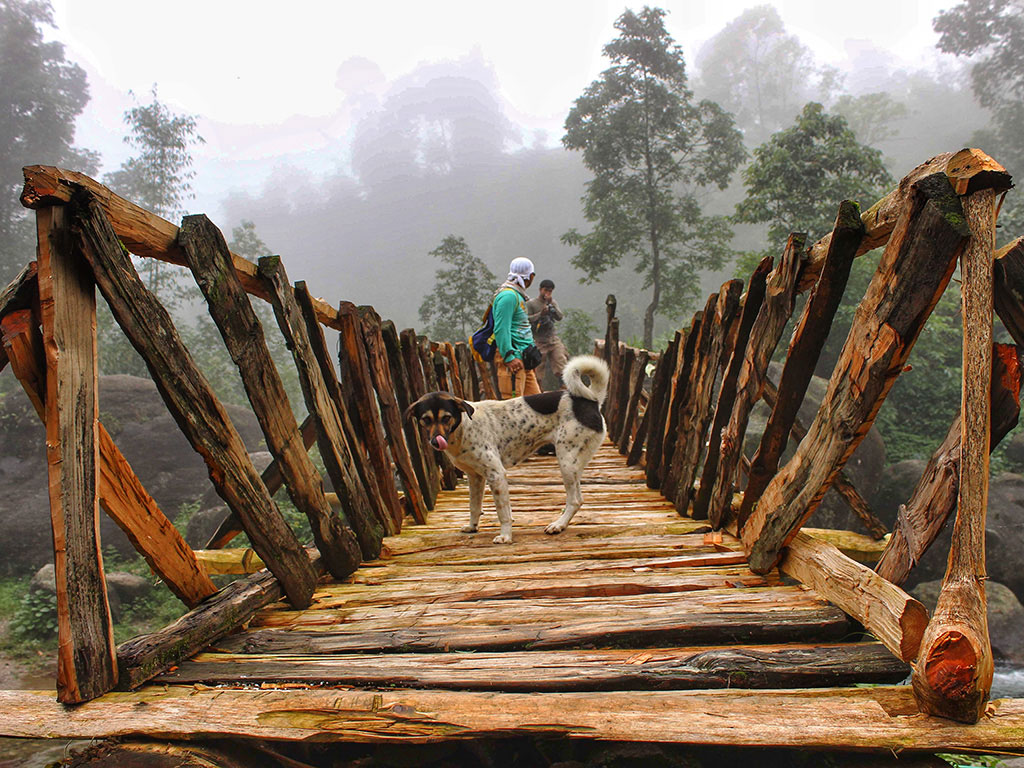 Treks which lead to misty views? Yes, please. The picture was clicked in the Dooar forests of West Bengal.