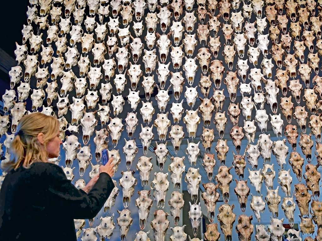 """Documenta 14 focuses on indigenous art and thought, as is evident in the exhibits by the Sami artists of Scandinavia. This curtain of reindeer skulls, """"Pile o' Sápmi"""", on display at Kassel, was conceived by Marét Ánne Sara to highlight her people's struggle to maintain their cultural identity. Photo by Thomas Lohnes/Stringer/Getty Images."""