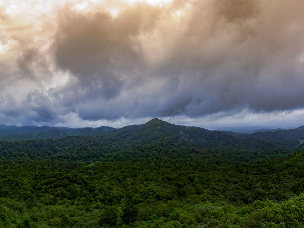 The rainforests of Agumbe, Karnataka are lesser-known and glorious.