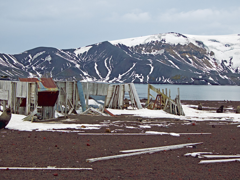 Seals find an unlikely resting spot amid the remains at Deception Island.  Photo by Himali Singh Soin.