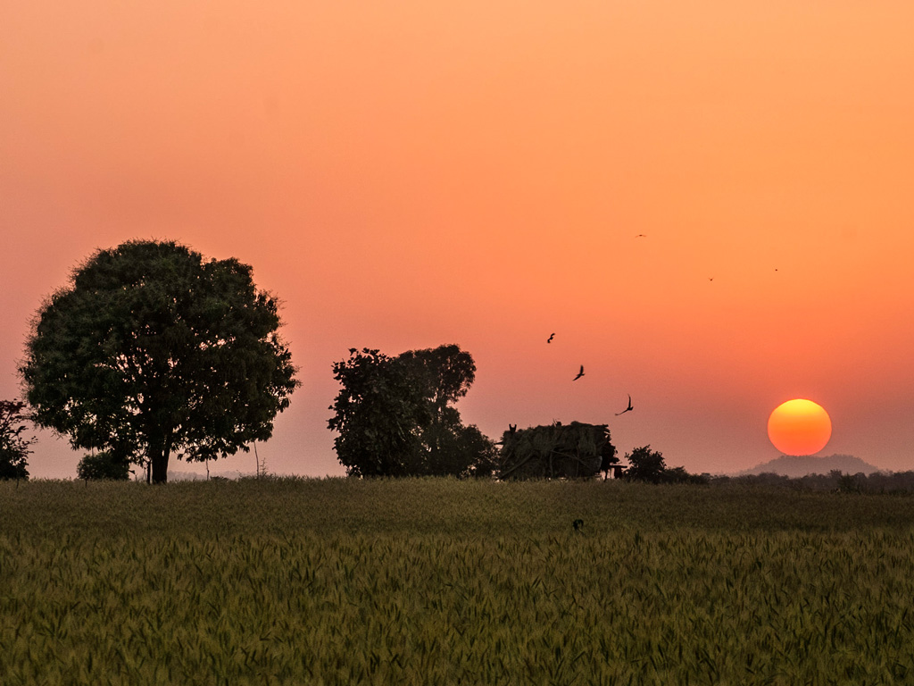 An evening safari in Satpura National Park results in stunning sunset views. Photo by Hoshner Reporter.